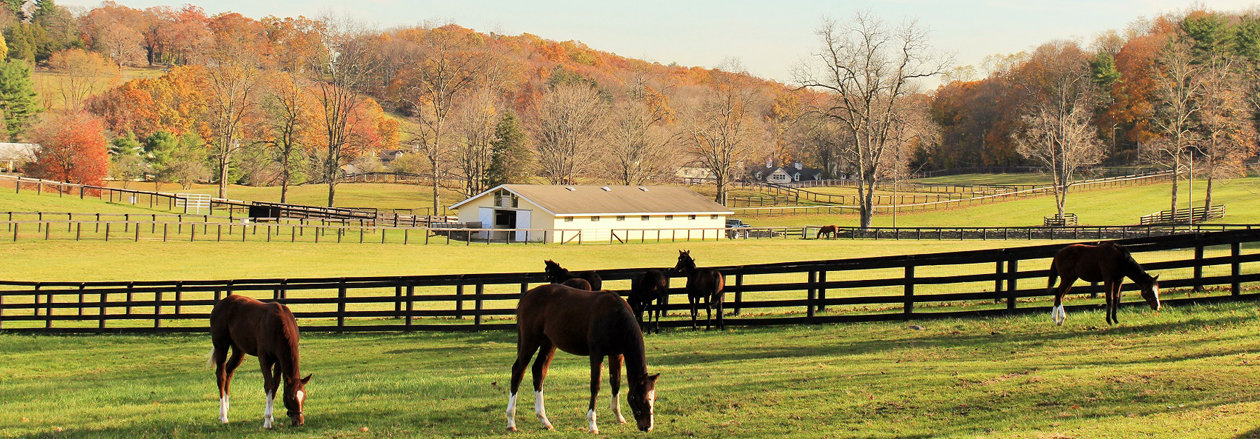 Horses in Pasture Westchester NY - GioHomes Real Estate
