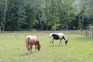 Horses gracing off Church St.
